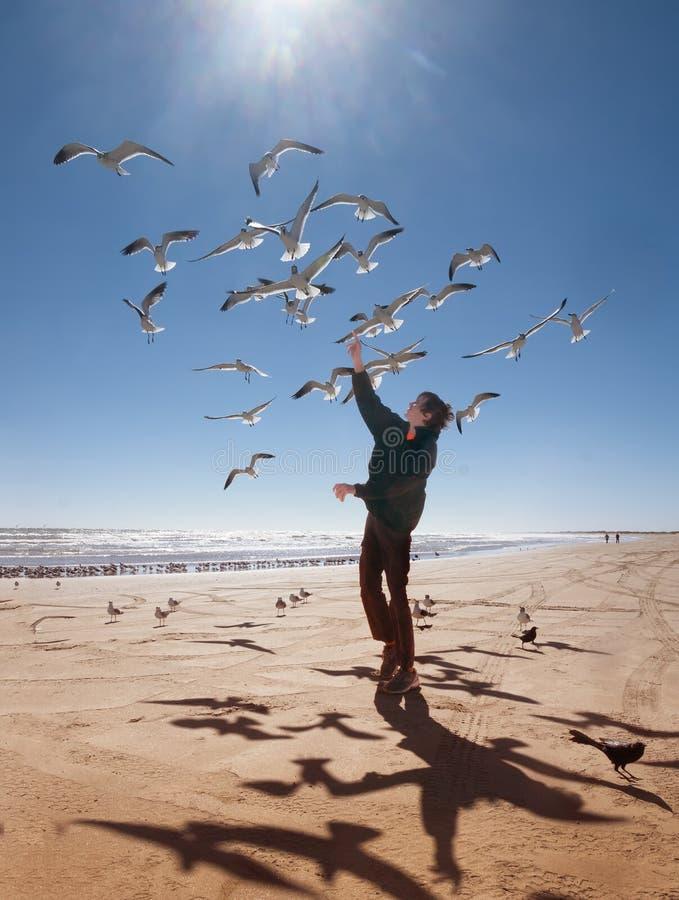 与海、少年和飞行的海鸥的风景 得克萨斯海岸,墨西哥湾,美国 库存图片