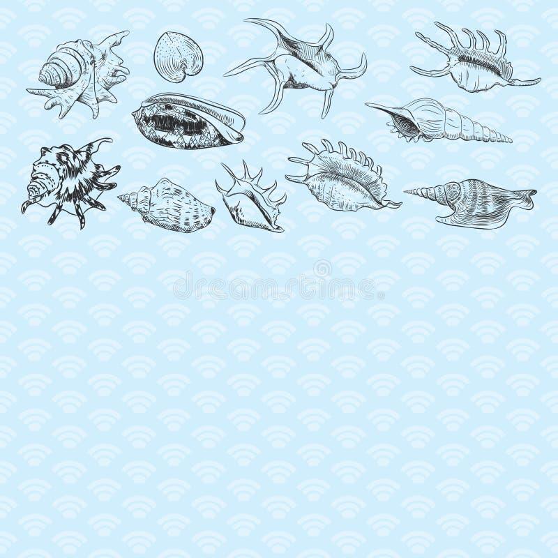 与海壳罕见的濒于灭绝的物种,在蓝色背景的软体动物黑等高的独特的博物馆收藏的夏天概念 库存例证