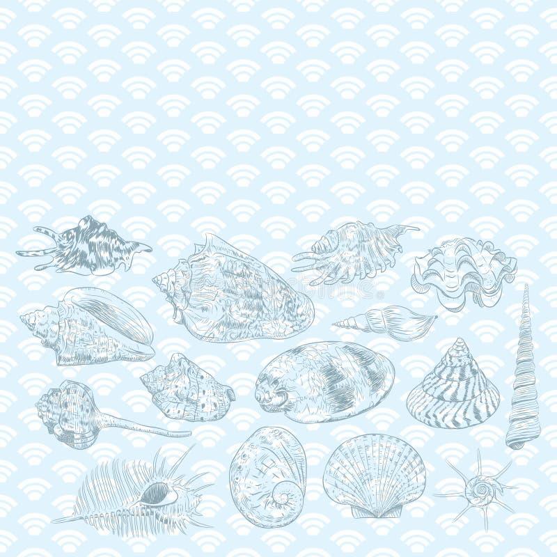 与海壳罕见的濒于灭绝的物种,在蓝色背景的软体动物黑等高的独特的博物馆收藏的夏天概念 向量例证