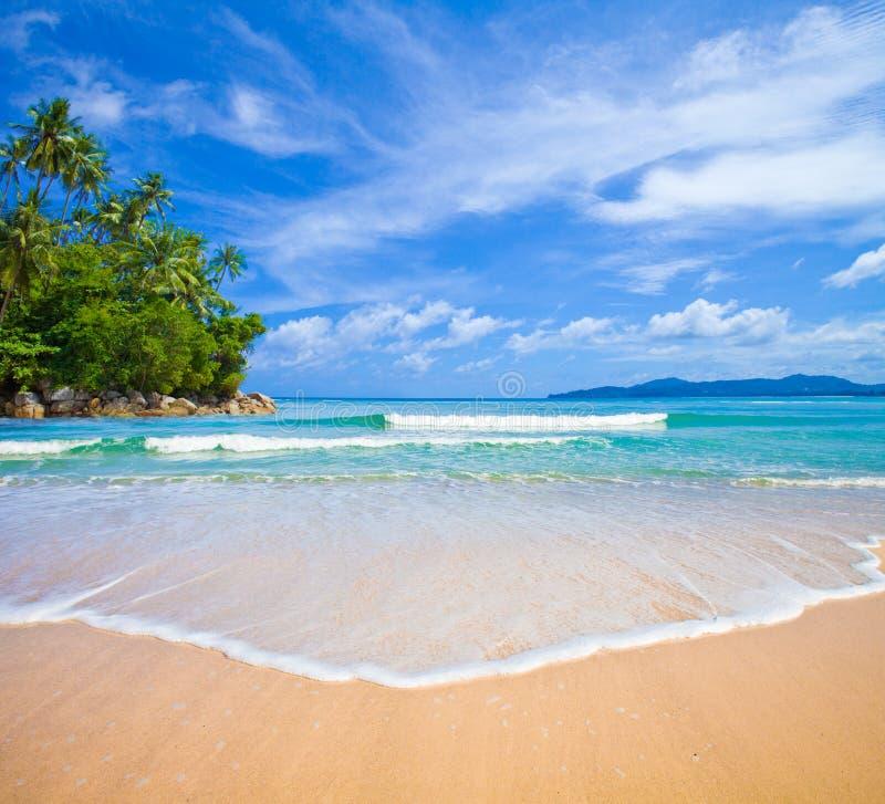 与海岛和棕榈树的海洋海滩 免版税图库摄影