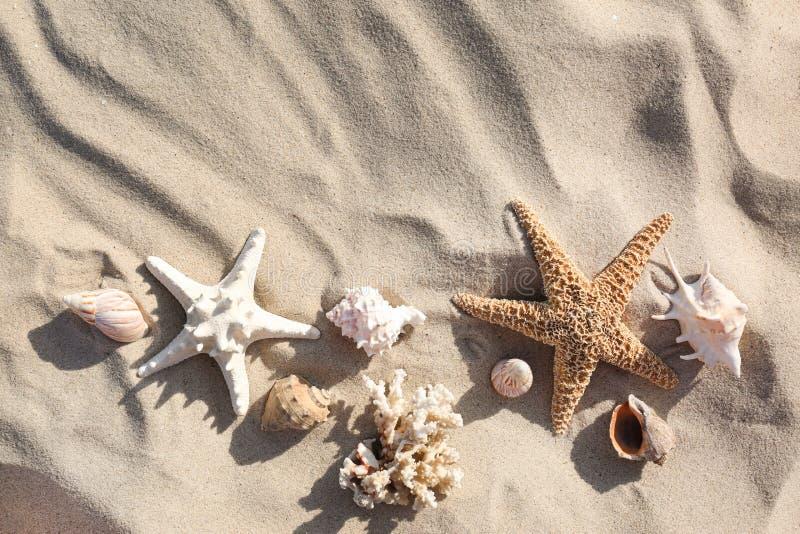 与海星和贝壳的平的被放置的构成在沙滩 库存照片