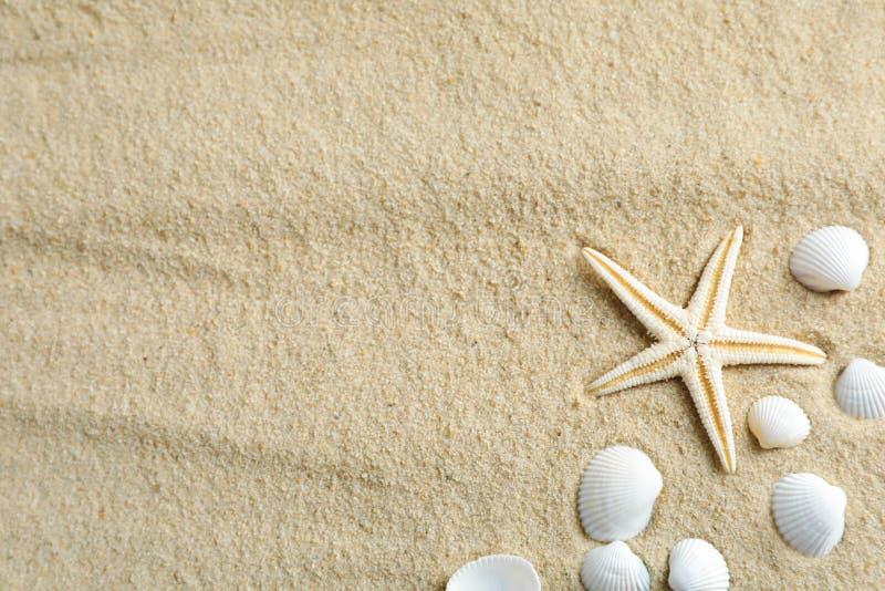 与海星和贝壳的清楚的文本的海沙,空间和顶视图 ?? 库存图片