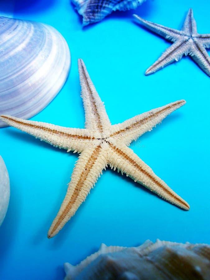 与海星和贝壳的夏天背景 库存照片