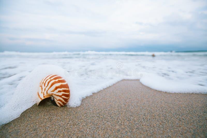 与海波浪,在太阳ligh下的佛罗里达海滩的舡鱼壳 免版税库存图片
