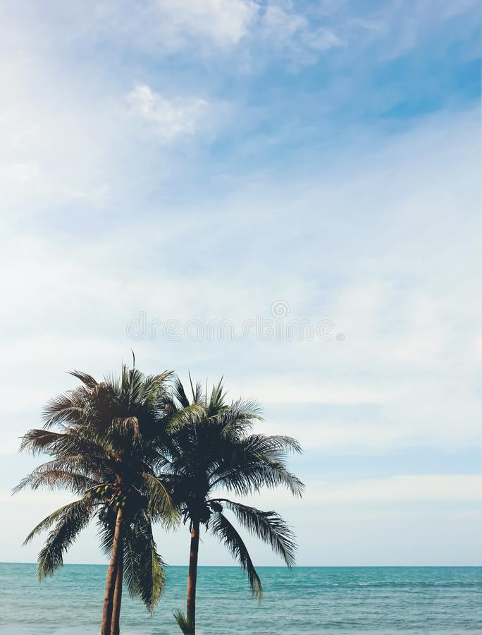 与海滩和晴朗的天空的可可椰子树 免版税库存照片