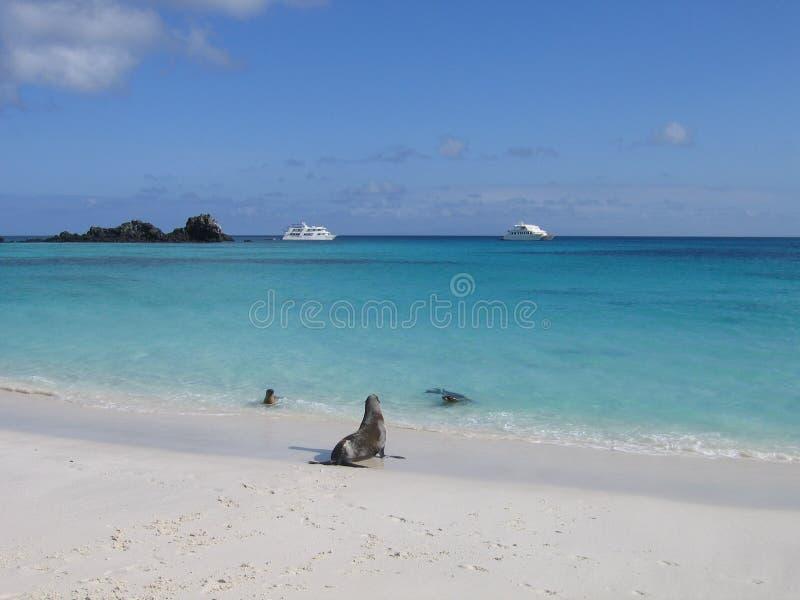 与海狮和小船的加拉帕戈斯海滩 免版税库存照片