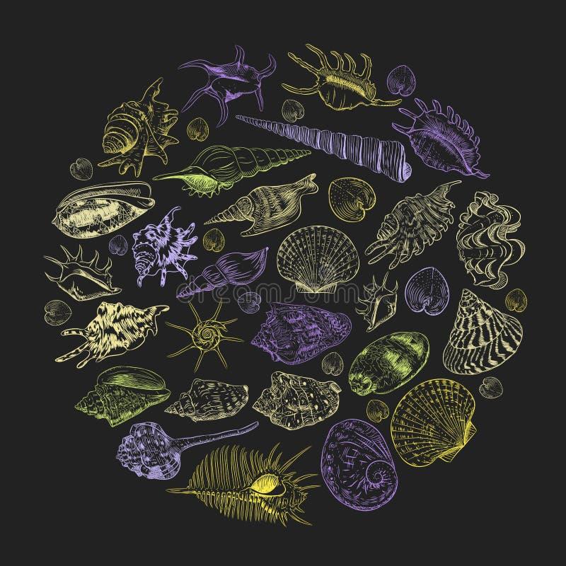 与海的独特的博物馆收藏的圆的构成夏天概念轰击罕见的濒于灭绝的物种,软体动物卡其色的棕色紫色 库存例证