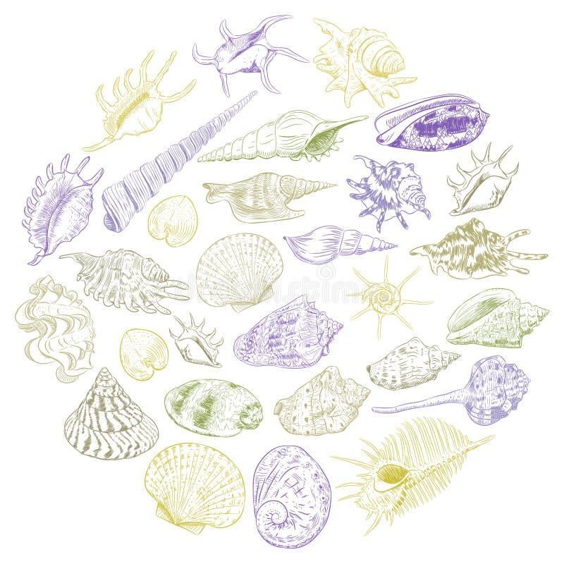 与海的独特的博物馆收藏的圆的构成夏天概念轰击罕见的濒于灭绝的物种,软体动物卡其色的棕色紫色 向量例证