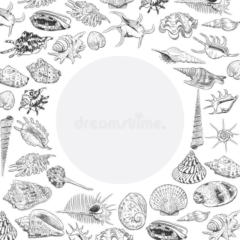 与海的独特的博物馆收藏的夏天概念轰击罕见的濒于灭绝的物种,在白色背景的软体动物黑等高 Ci 皇族释放例证