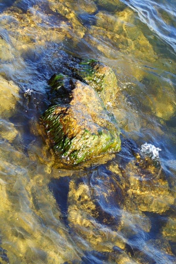 与海藻的岩石 图库摄影