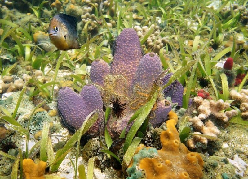 与海蛇尾的五颜六色的海海绵 库存图片