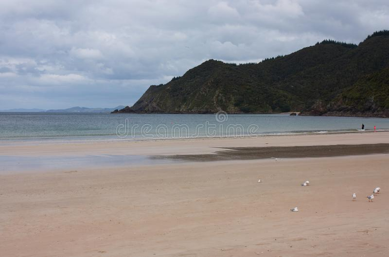与海鸥和人的一个科罗曼德海滩后面的在新西兰 免版税库存照片