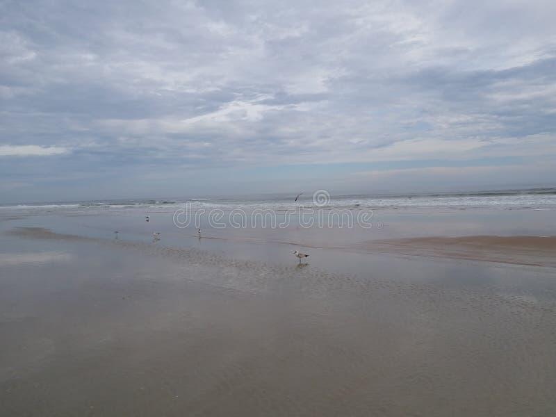 与海鸥的海滩坐岸 免版税库存照片