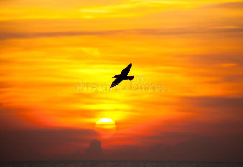 与海鸥飞行的平静的场面 图库摄影