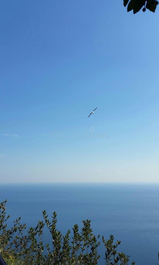 与海鸥飞行的美妙的海视图从阿马飞海岸拉韦洛意大利 库存图片