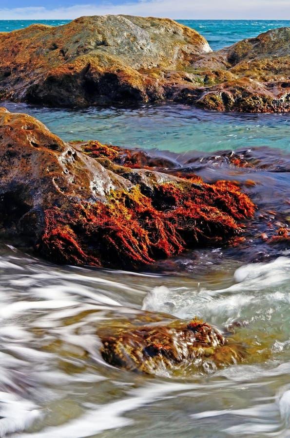与海藻的岩石 免版税库存图片