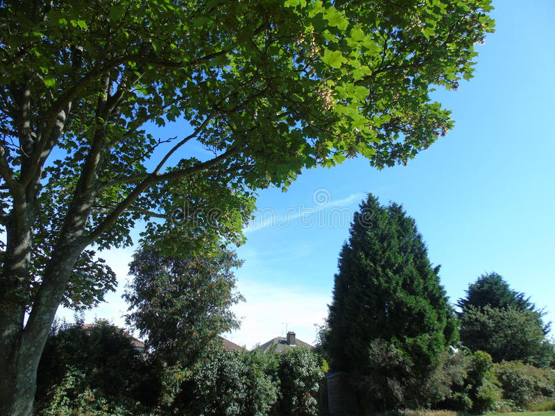 与淡光在发光的风的叶子的闪耀的树 免版税库存照片