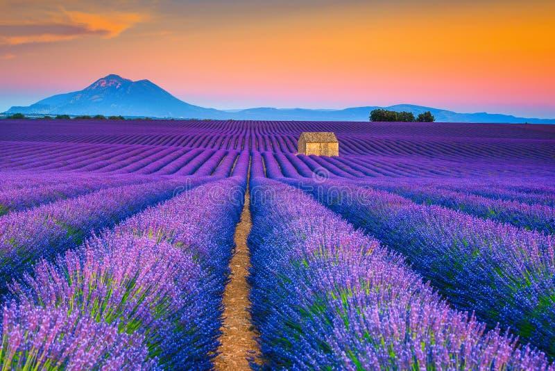 与淡紫色领域的美妙的夏天风景在普罗旺斯,瓦朗索尔,法国 免版税库存照片