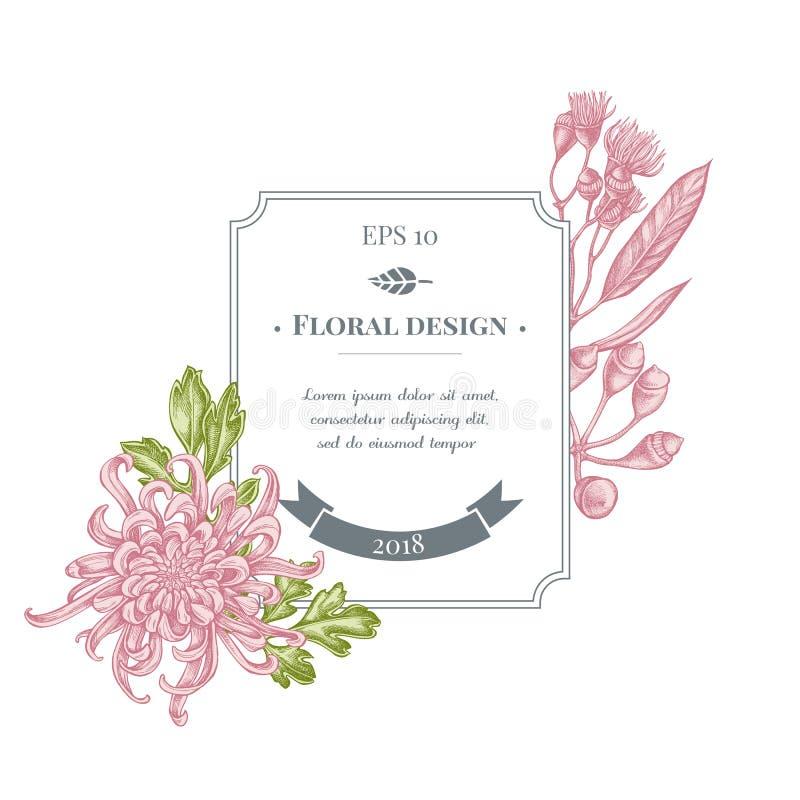 与淡色日本菊花,黑莓百合,玉树花的徽章设计 向量例证