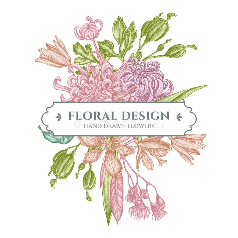 与淡色日本菊花,黑莓百合,玉树花的百花香设计 库存例证
