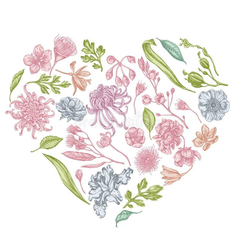 与淡色日本菊花,黑莓百合,玉树花,银莲花属,虹膜japonica的心脏花卉设计 向量例证