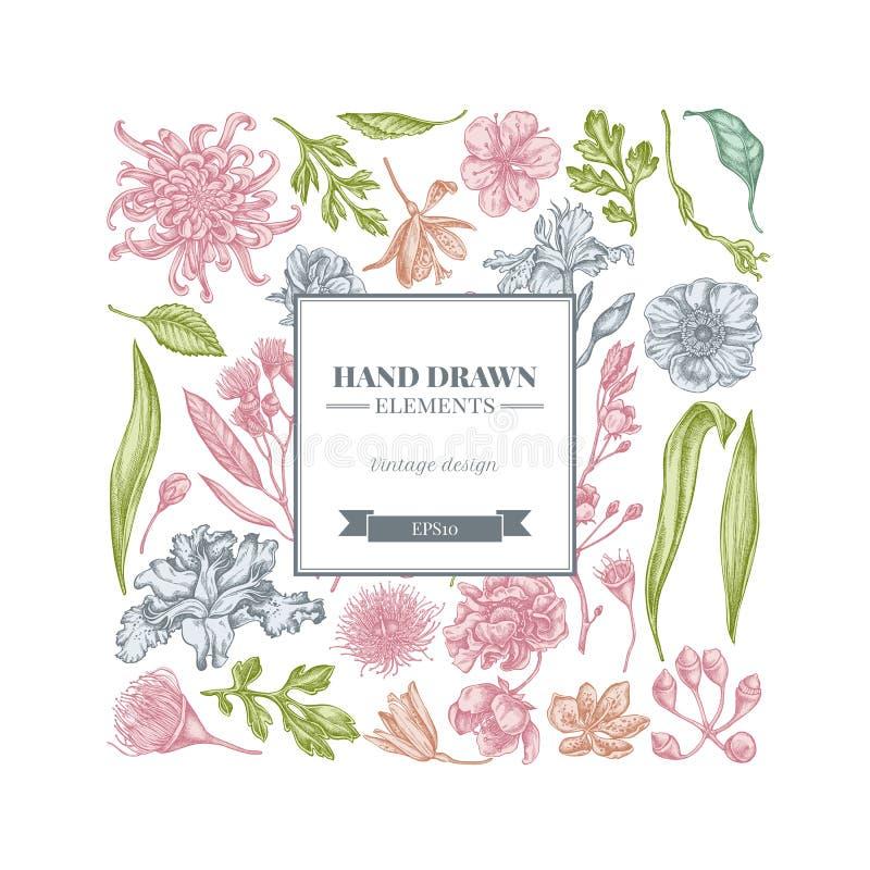 与淡色日本菊花,黑莓百合,玉树花,银莲花属,虹膜japonica的正方形花卉设计 库存例证