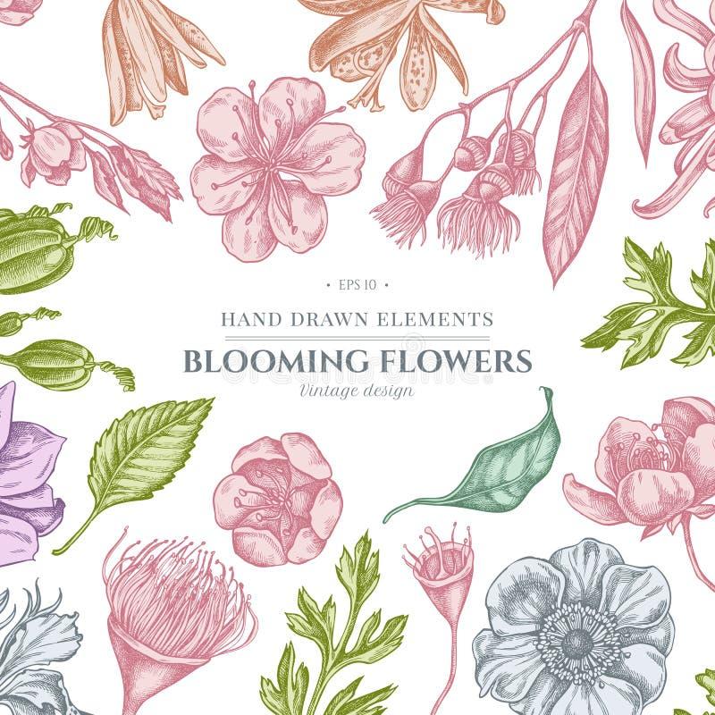 与淡色日本菊花,黑莓百合,玉树花,银莲花属,虹膜japonica,佐仓的花卉设计 皇族释放例证