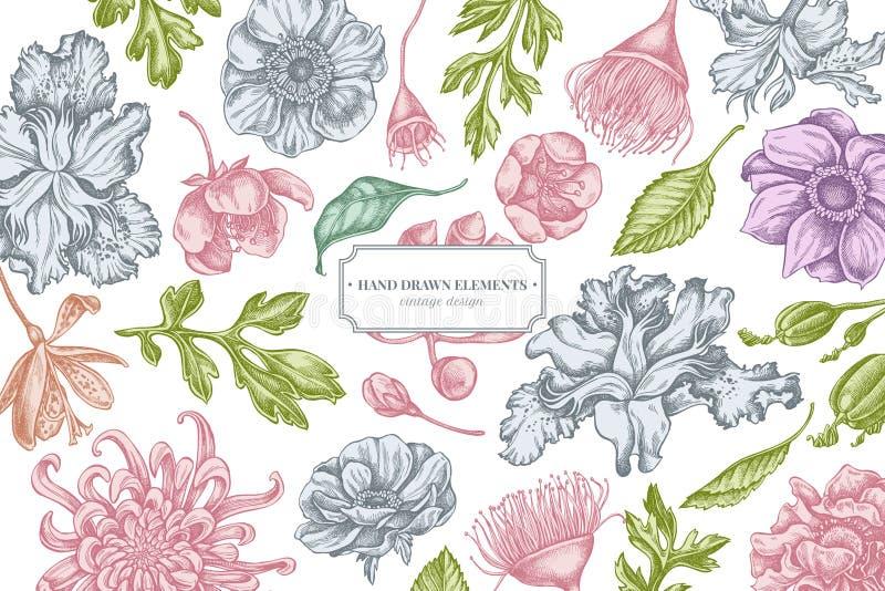 与淡色日本菊花,黑莓百合,玉树花,银莲花属,虹膜japonica,佐仓的花卉设计 库存例证