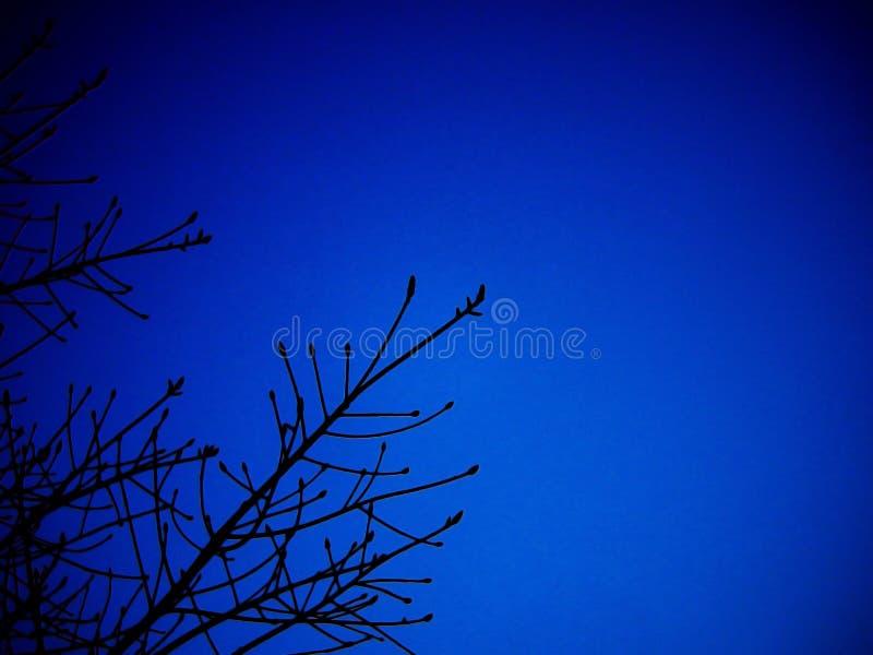 与深蓝天空的Silluate树 库存图片