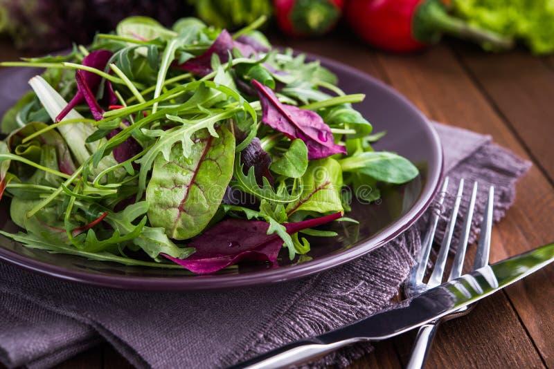与混杂的绿色& x28的新鲜的沙拉; 芝麻菜, mesclun, mache& x29;在黑暗的木背景关闭 免版税库存照片