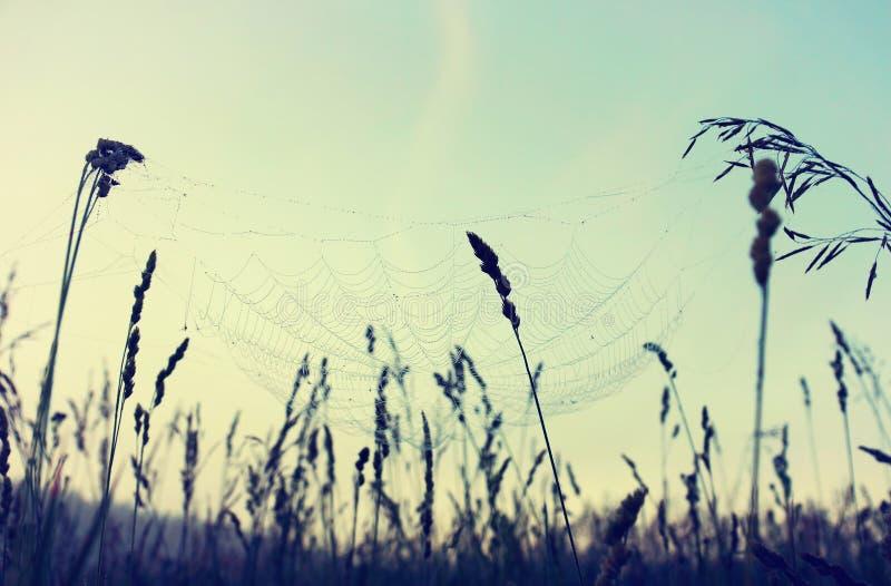 与清早露滴的蜘蛛网 库存图片