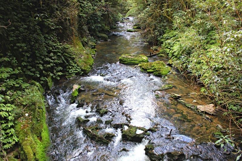 与清楚的水和植物的狭窄的河小河在任一边 免版税图库摄影