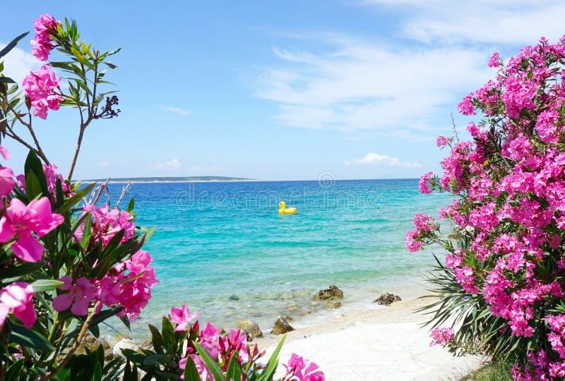 与清楚的蓝色和绿松石海构筑与桃红色夹竹桃开花的树和一只可膨胀的鸭子的海景表面上 免版税库存照片