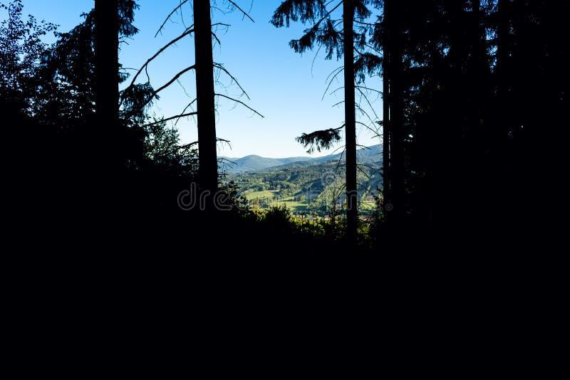 与温暖的光光芒的不可思议的黑暗的森林秋天森林风景  Mistic?? 库存图片