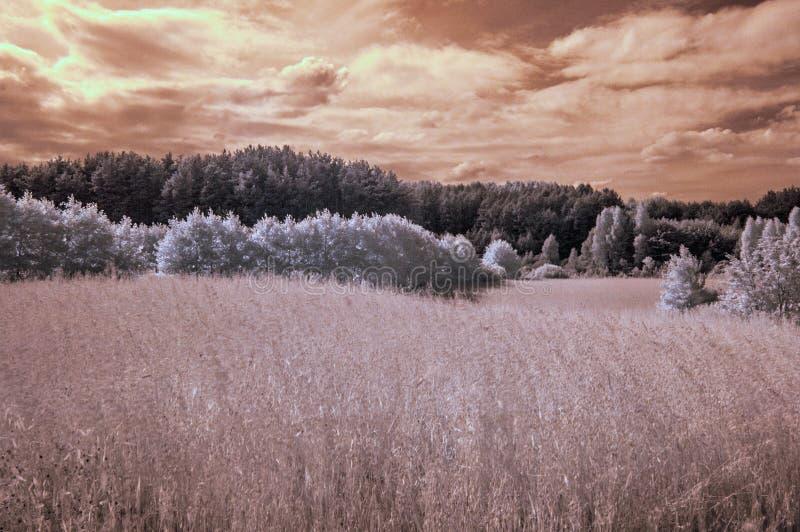 与温暖的颜色的红外风景 图库摄影