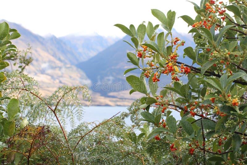与湖和山景背景的野生莓果 免版税库存照片