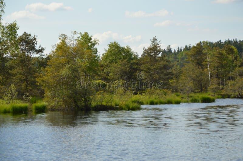 与湖和树的荒野 图库摄影