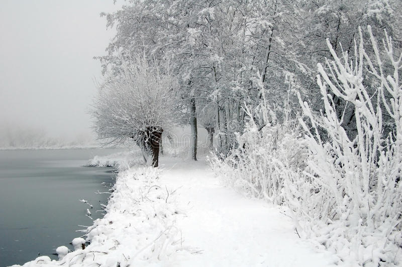 与湖和树的荷兰雪风景 免版税图库摄影