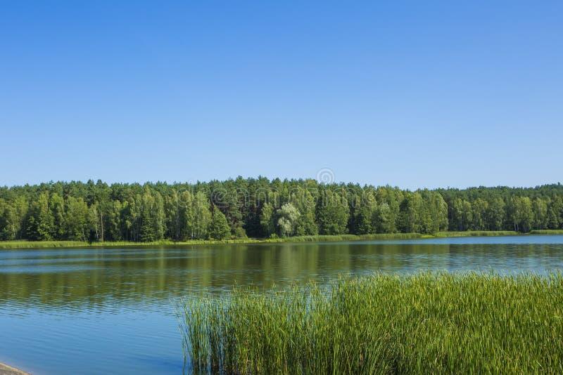 与湖和森林的镇静风景 库存照片