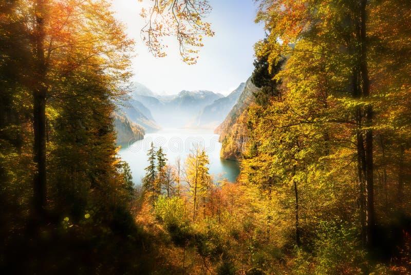 与湖的壮观的森林视图 免版税图库摄影