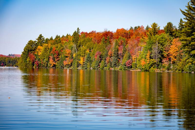 与湖的秋天树 免版税库存图片