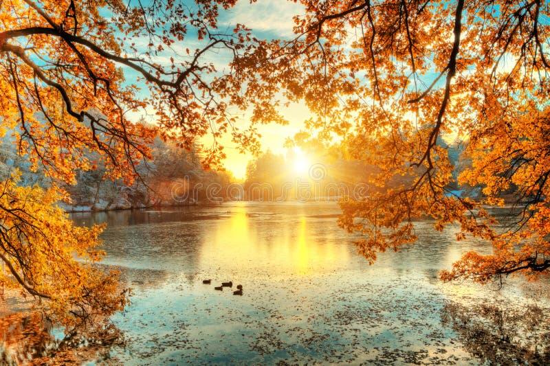 与湖的美丽的色的树在秋天,风景photograp 免版税图库摄影