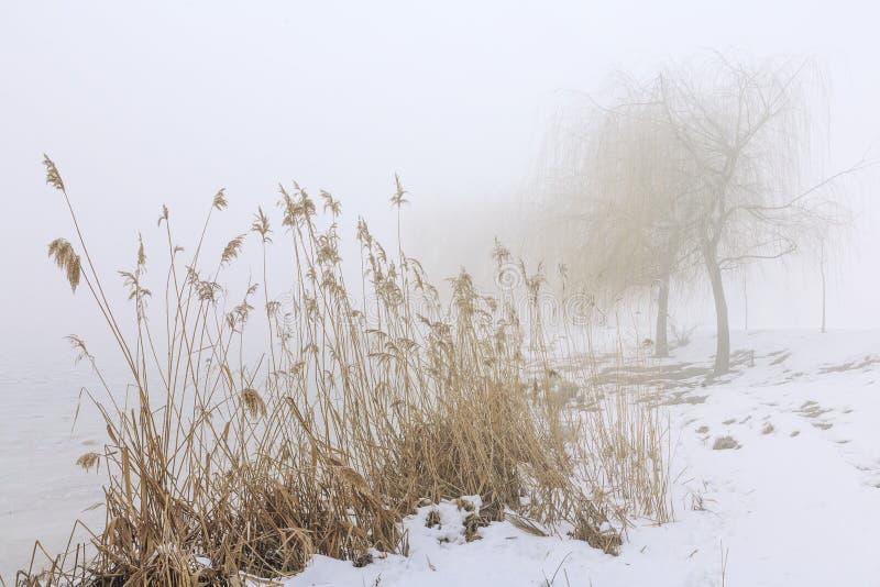 与湖的薄雾斯诺伊岸的冬天风景雾的 免版税库存照片