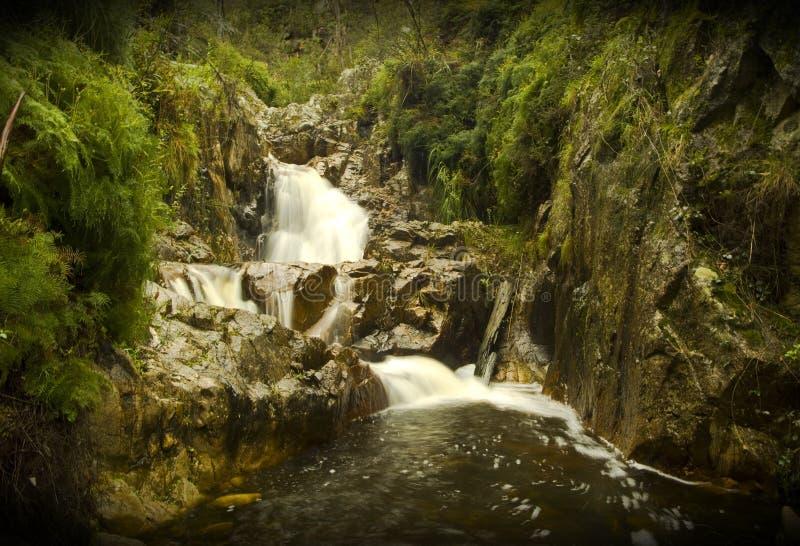 与湿青苔岩石的微型瀑布 图库摄影