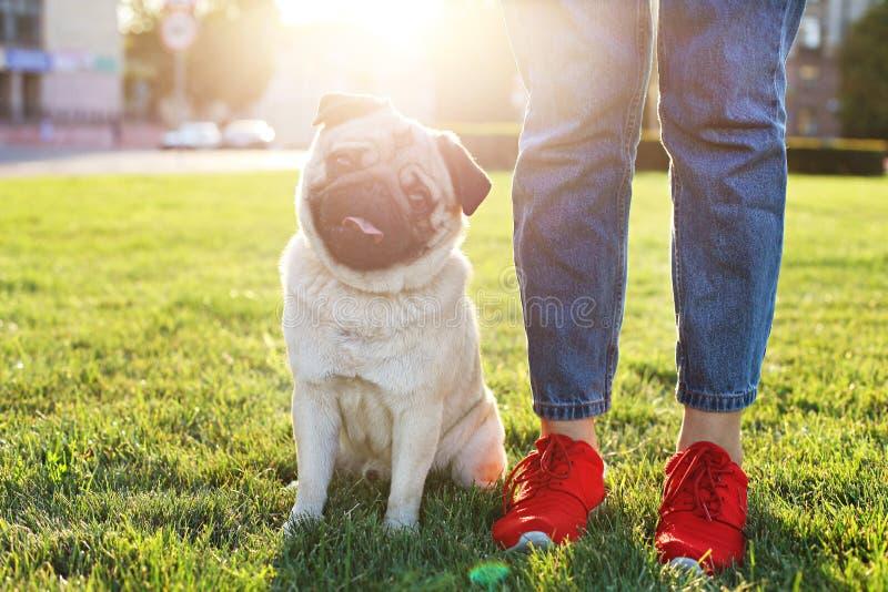 与滑稽的棕色和黑污点的幼小小品种狗在面孔 逗人喜爱的愉快的哈巴狗家养的小狗画象户外,步行在公园 库存图片