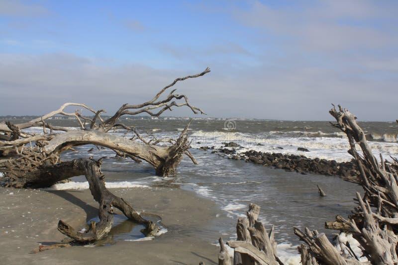 与漂泊木头的海洋海滩在自然状态 免版税库存图片