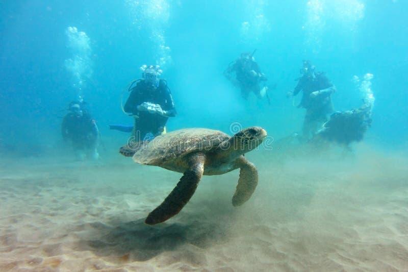 与潜水者人群的海龟在背景中 库存图片