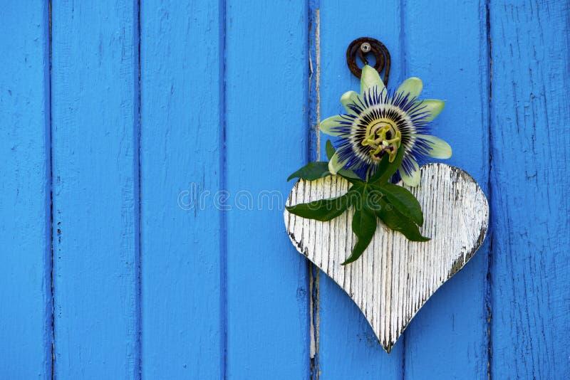 与激情花的白色木心脏在蓝色背景 图库摄影
