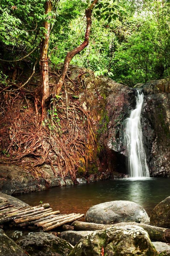与瀑布的热带雨林风景 免版税库存照片