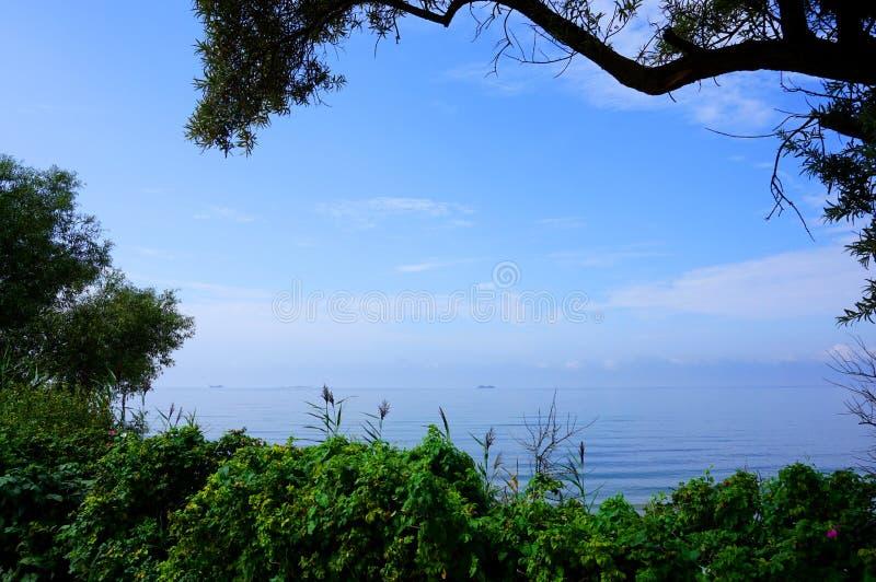 与灌木和分支的海背景 库存图片